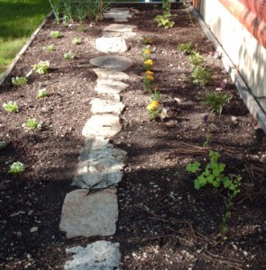 newly planted annuals complimenting perennials