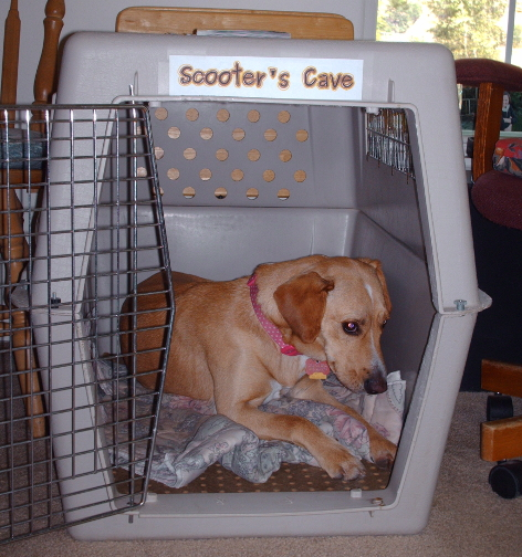 Scooter's Cave