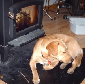 roast dog