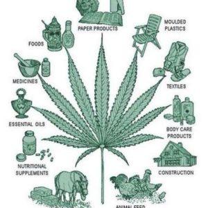 cannabis positive uses